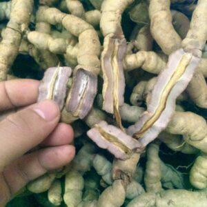 Lõi củ ba kích tím trồng