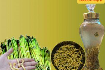 Shop Rừng Vàng thông báo giá bán mùa Sâu chít Điện Biên 2017 – 2018