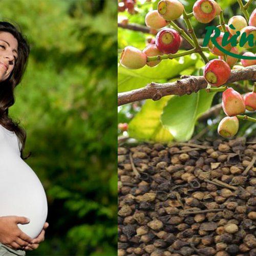 Thắc mắc bà bầu mang thai có nên uống nước nụ vối không