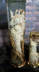 đinh lăng điêu khắc rồng khủng phôi 20 kg