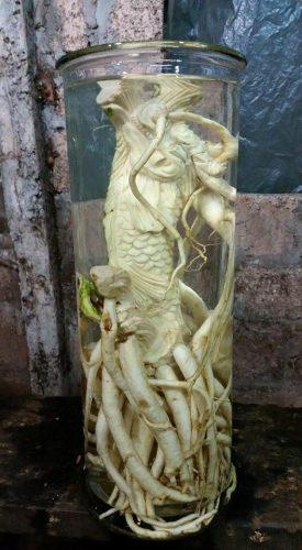 đinh lăng điêu khắc bình cá chép hóa rồng
