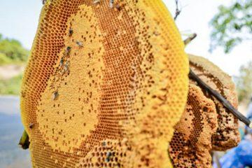 Điểm danh các tác dụng của sáp ong rừng – Quà tặng từ mẹ thiên nhiên