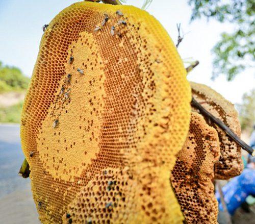 hình ảnh một tổ ong ruồi