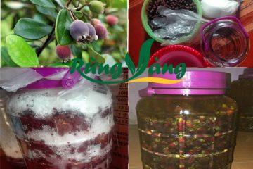 Công dụng của quả (trái) sim rừng với sức khỏe mà bạn chưa biết tới