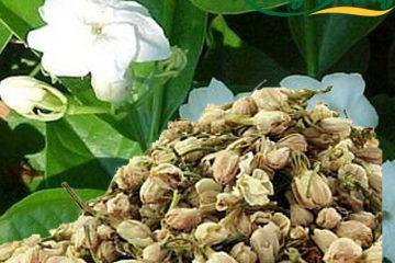 Hoa Lài – Hoa Nhài Có Tác Dụng Gì? Các cách sử dụng hoa nhài
