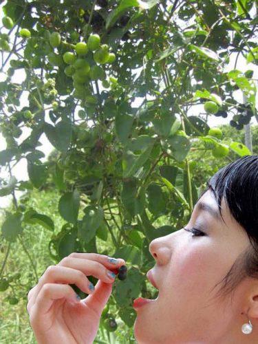 Quả (trái) nho rừng ăn được không