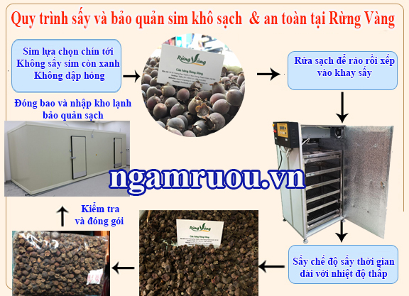 Quy trình sấy và bảo quản sim khô sạch tại Shop Rừng Vàng