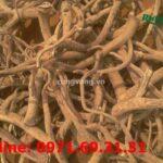 Xem ngay: Rễ đinh lăng khô có những tác dụng gì với sức khỏe?