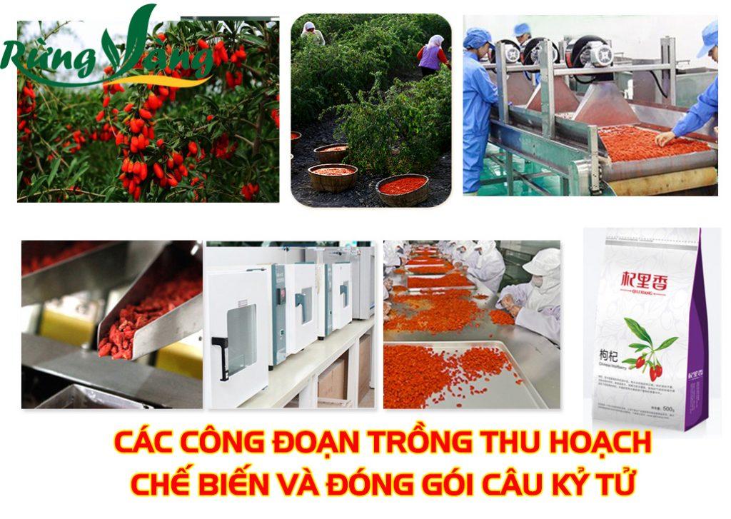 Câu kỷ tử nội địa Trung Quốc được trồng, chế biến và đóng gói sạch - chuyên nghiệp và an toàn