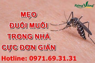Phương pháp xua muỗi để phòng bệnh và xử trí đúng khi bị muỗi đốt